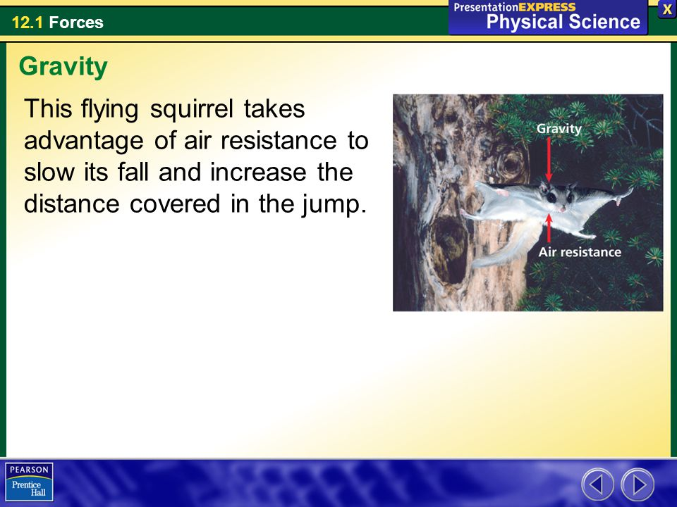 12.1 Forces This flying squirrel takes advantage of air resistance to slow its fall and increase the distance covered in the jump. Gravity