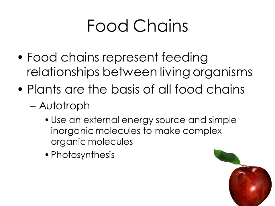 Food Chains Food chains represent feeding relationships between living organisms Plants are the basis of all food chains –Autotroph Use an external energy source and simple inorganic molecules to make complex organic molecules Photosynthesis