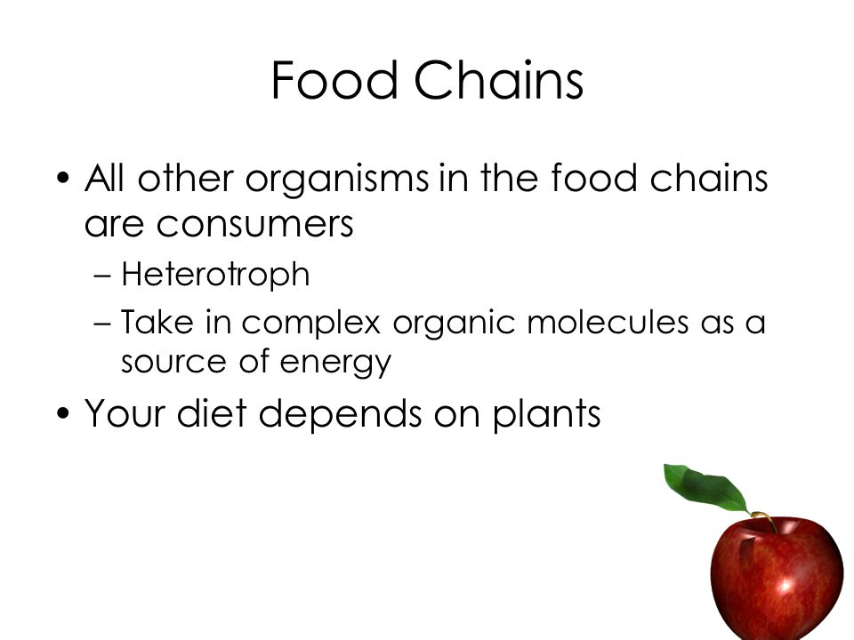Food Chains All other organisms in the food chains are consumers –Heterotroph –Take in complex organic molecules as a source of energy Your diet depends on plants