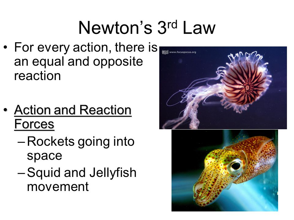 Newton's 3 rd Law For every action, there is an equal and opposite reaction Action and Reaction ForcesAction and Reaction Forces –Rockets going into s