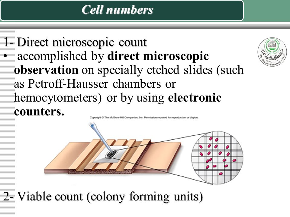 Measurement of Bacterial Growth  Cell numbers  Metabolic rate
