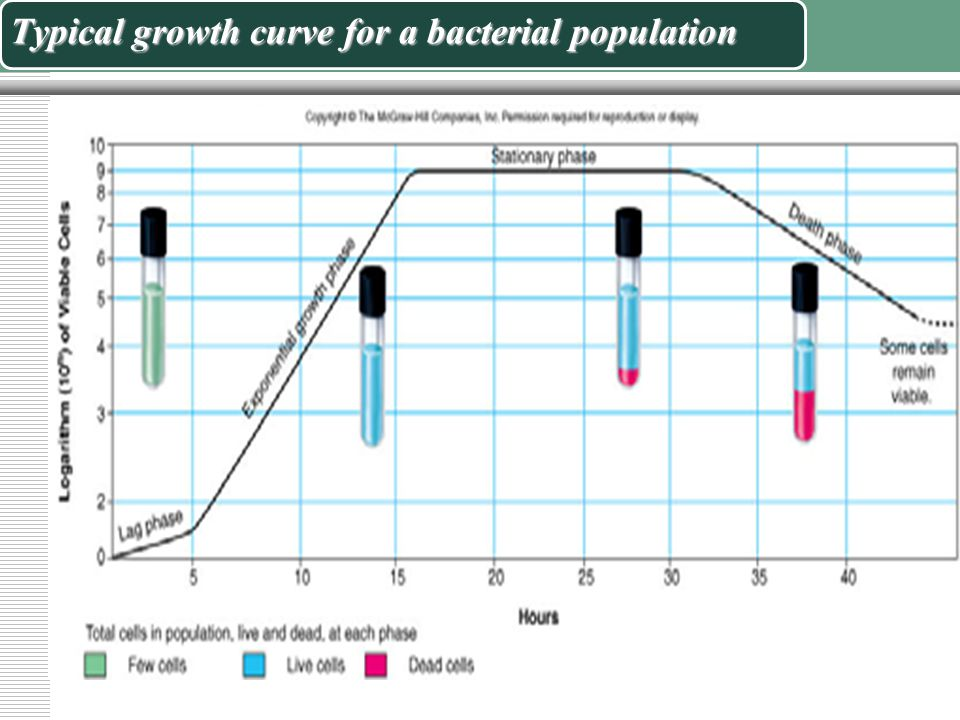 The Growth Cycle  The population growth is studied by analyzing the growth curve of a microbial culture.  The standard bacterial growth curve descri