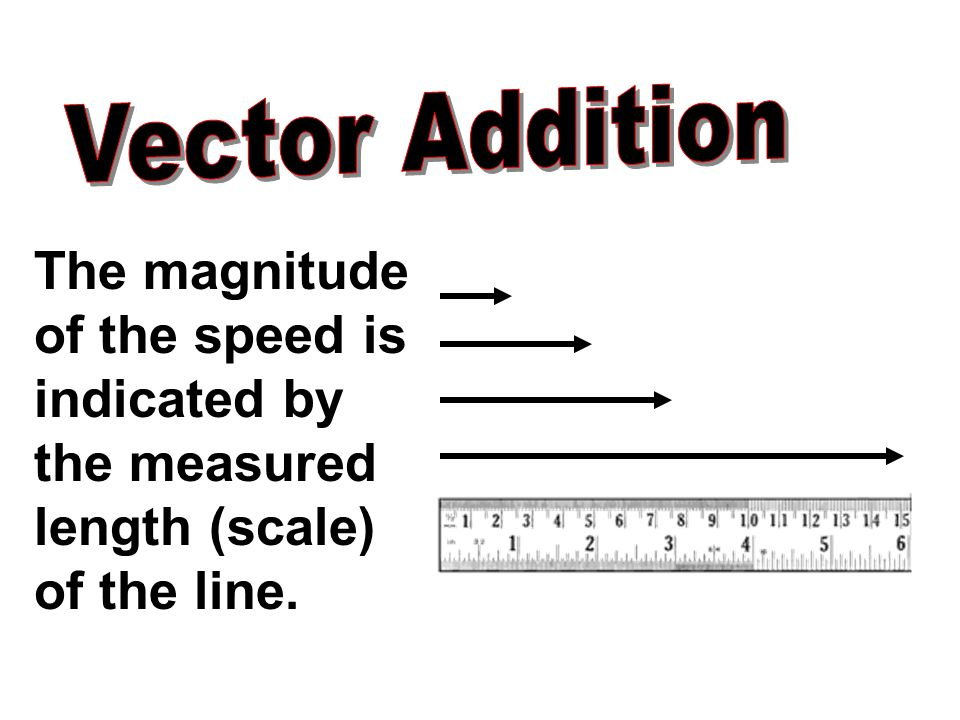 The magnitude of the speed is indicated by the measured length (scale) of the line.