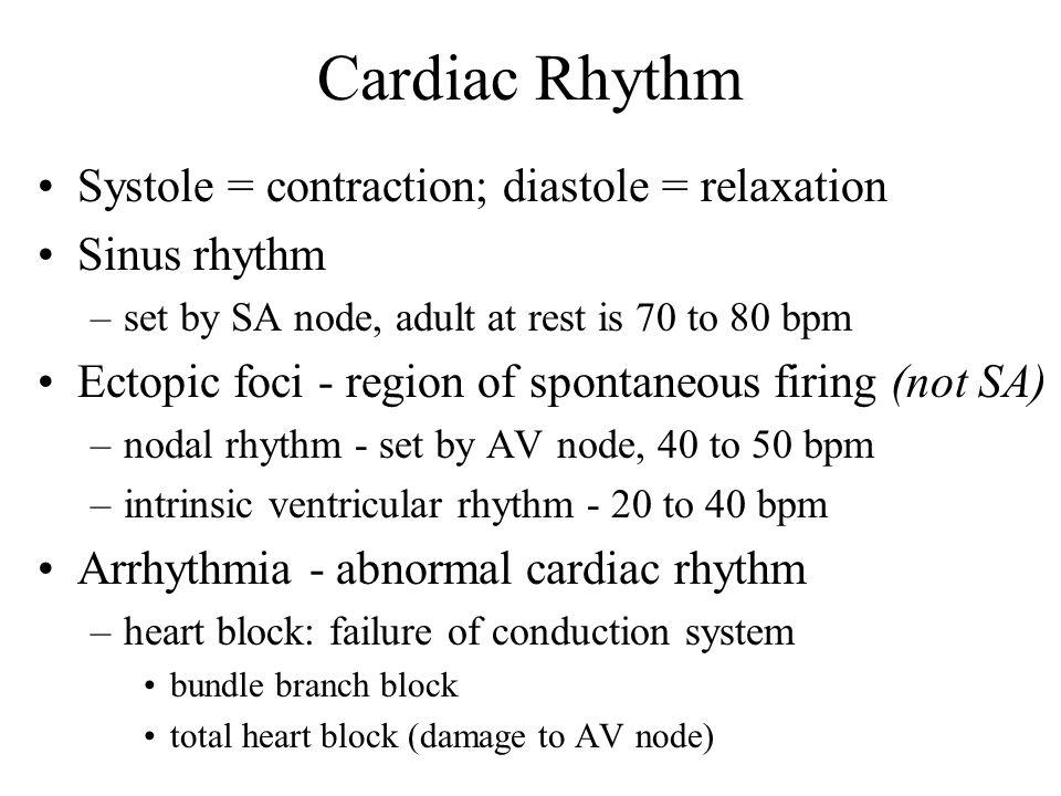 Cardiac Rhythm Systole = contraction; diastole = relaxation Sinus rhythm –set by SA node, adult at rest is 70 to 80 bpm Ectopic foci - region of spontaneous firing (not SA) –nodal rhythm - set by AV node, 40 to 50 bpm –intrinsic ventricular rhythm - 20 to 40 bpm Arrhythmia - abnormal cardiac rhythm –heart block: failure of conduction system bundle branch block total heart block (damage to AV node)