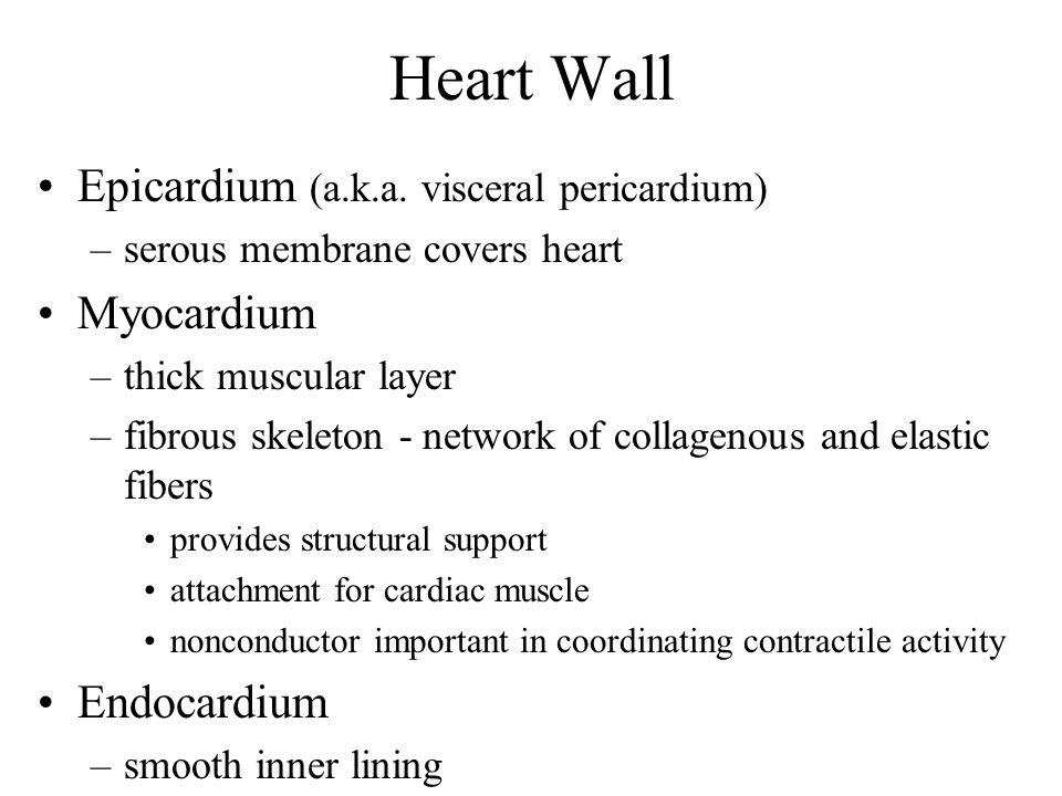 Heart Wall Epicardium (a.k.a.
