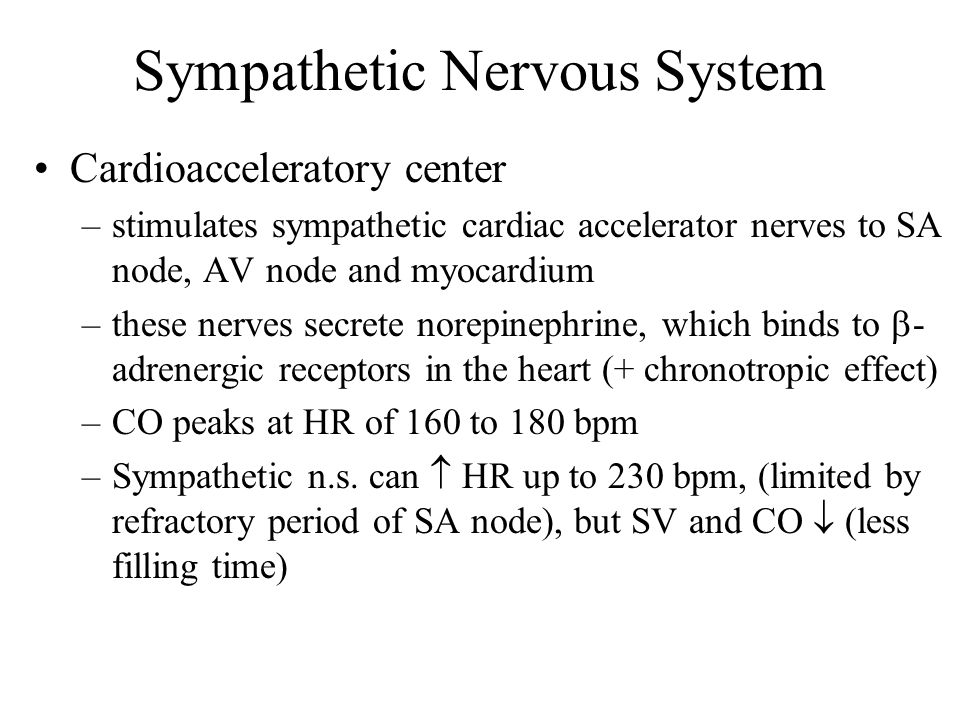Sympathetic Nervous System Cardioacceleratory center –stimulates sympathetic cardiac accelerator nerves to SA node, AV node and myocardium –these nerves secrete norepinephrine, which binds to  - adrenergic receptors in the heart (+ chronotropic effect) –CO peaks at HR of 160 to 180 bpm –Sympathetic n.s.