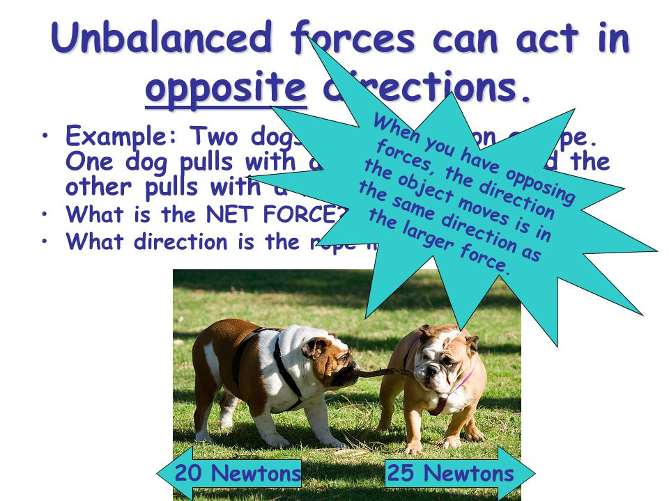 Unbalanced forces can act in opposite directions. Example: Two dogs are tugging on a rope.