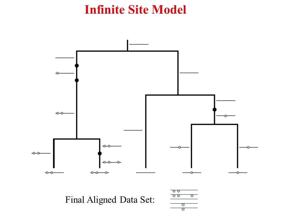 Final Aligned Data Set: Infinite Site Model