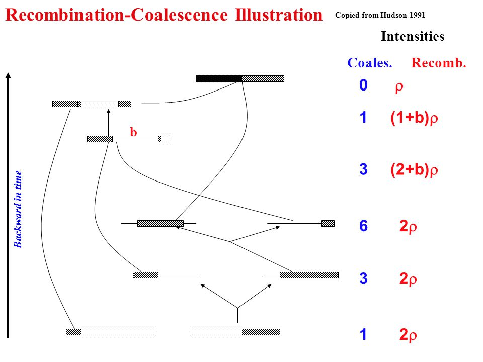 Recombination-Coalescence Illustration Copied from Hudson 1991 Intensities Coales.