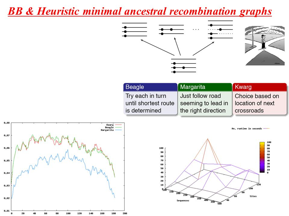 BB & Heuristic minimal ancestral recombination graphs