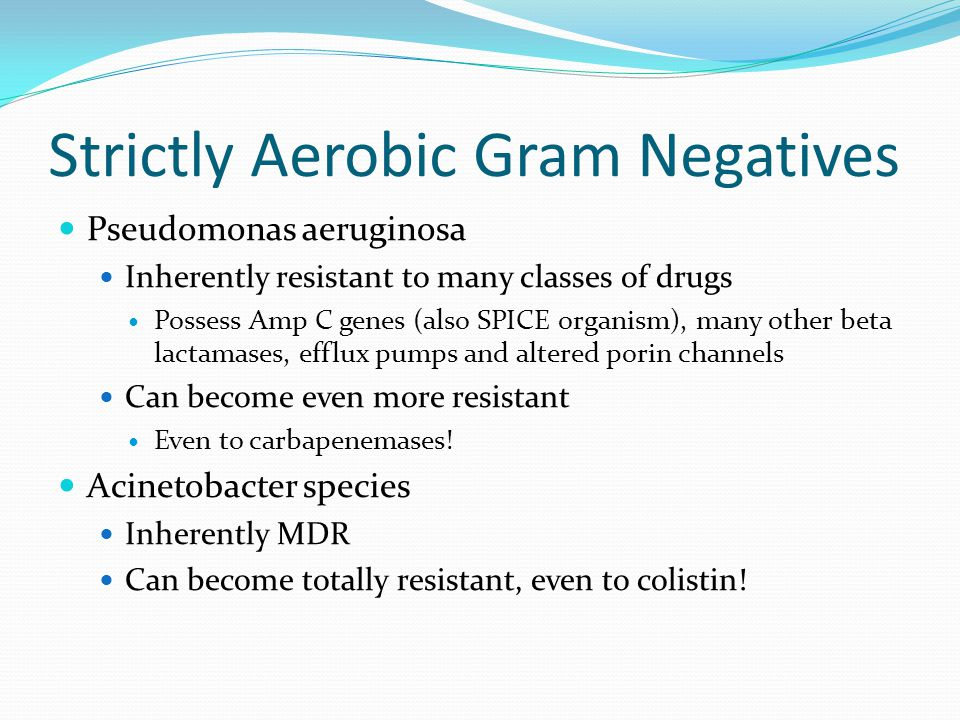 Strictly Aerobic Gram Negatives Pseudomonas aeruginosa Inherently resistant to many classes of drugs Possess Amp C genes (also SPICE organism), many other beta lactamases, efflux pumps and altered porin channels Can become even more resistant Even to carbapenemases.