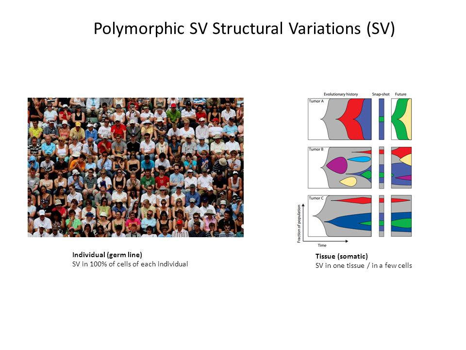 Individual (germ line) SV in 100% of cells of each individual Tissue (somatic) SV in one tissue / in a few cells Polymorphic SV Structural Variations (SV)