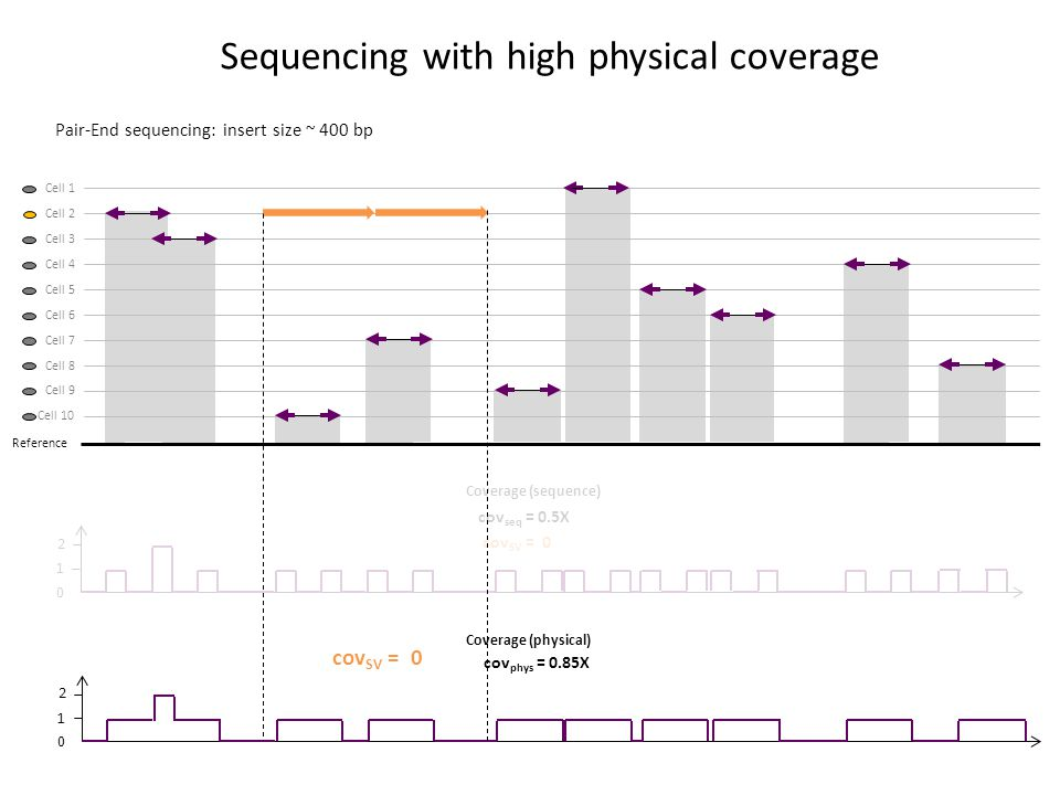 Pair-End sequencing: insert size ~ 400 bp Sequencing with high physical coverage 2 1 0 2 1 0 Coverage (sequence) cov seq = 0.5X cov SV = 0 Reference Cell 1 Cell 2 Cell 3 Cell 4 Cell 5 Cell 6 Cell 7 Cell 8 Cell 9 Cell 10 cov phys = 0.85X Coverage (physical)