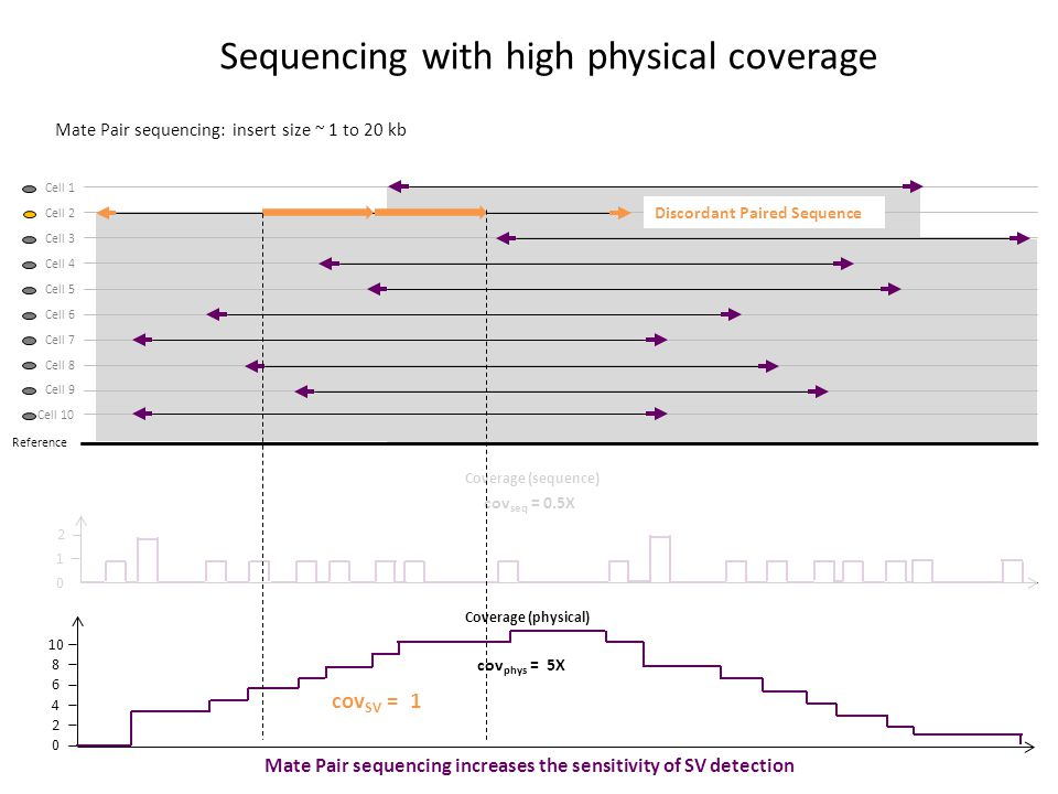 Mate Pair sequencing: insert size ~ 1 to 20 kb Sequencing with high physical coverage Reference Cell 1 Cell 2 Cell 3 Cell 4 Cell 5 Cell 6 Cell 7 Cell 8 Cell 9 Cell 10 2 1 0 2 0 4 6 8 10 cov seq = 0.5X cov phys = 5X Coverage (sequence) Coverage (physical) cov SV = 1 Discordant Paired Sequence Mate Pair sequencing increases the sensitivity of SV detection