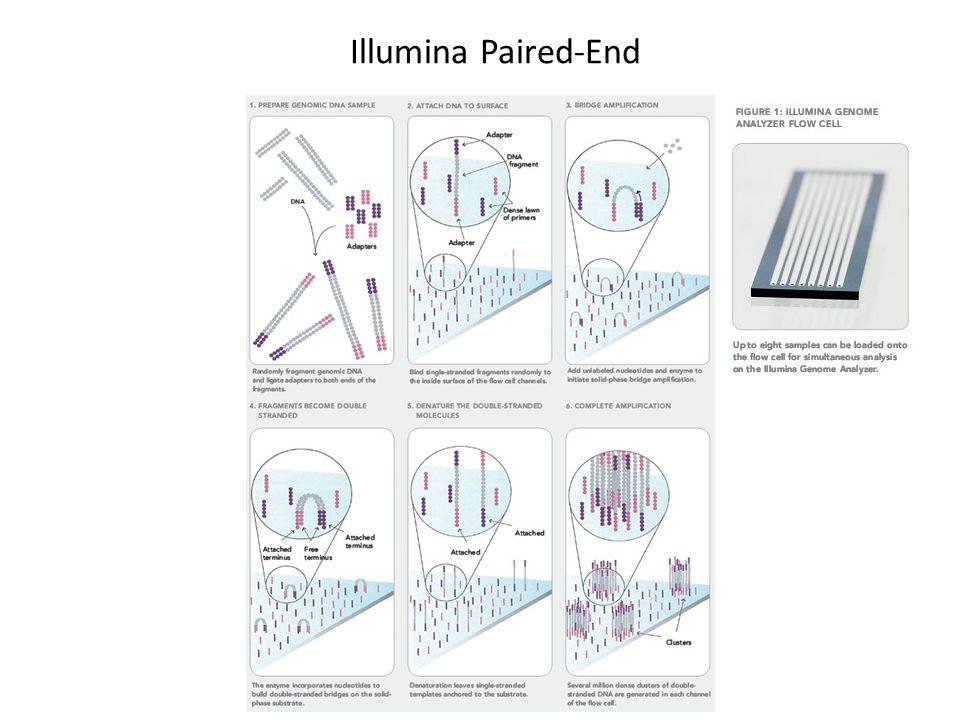 Illumina Paired-End