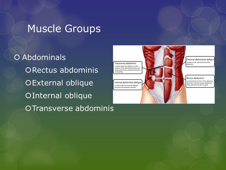 Muscle Groups  Abdominals  Rectus abdominis  External oblique  Internal oblique  Transverse abdominis