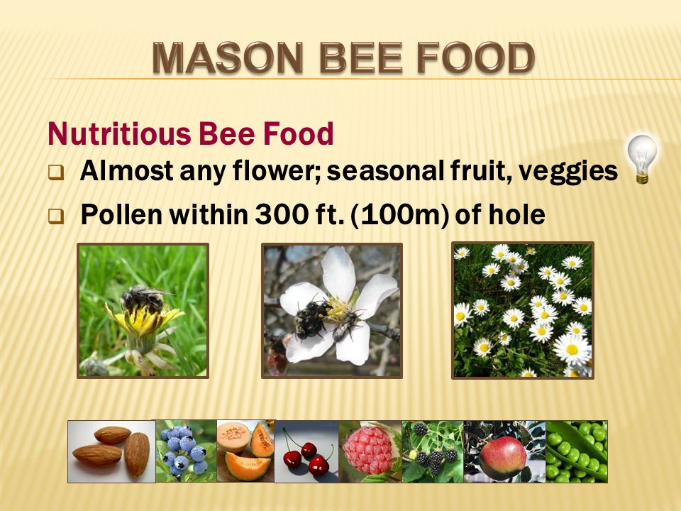  Almost any flower; seasonal fruit, veggies  Pollen within 300 ft.