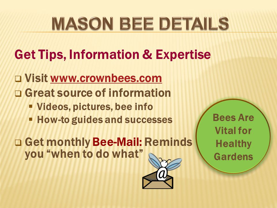  Visit www.crownbees.comwww.crownbees.com  Great source of information  Videos, pictures, bee info  How-to guides and successes  Get monthly Bee-Mail: Reminds you when to do what Get Tips, Information & Expertise Bees Are Vital for Healthy Gardens