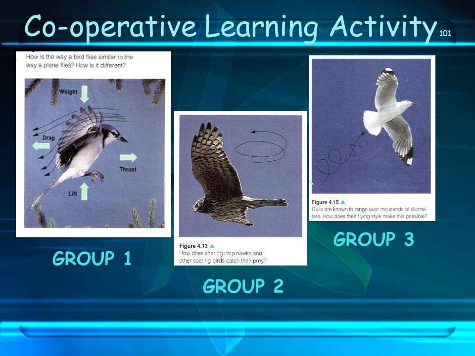 Co-operative Learning Activity 101 GROUP 1 GROUP 3 GROUP 2
