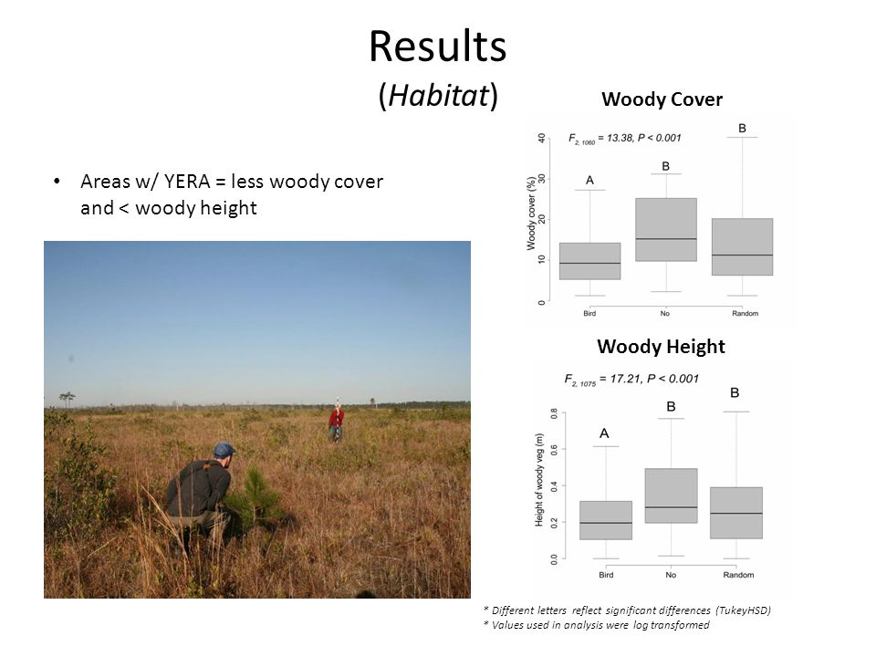 Results (Habitat) Areas w/ YERA = less woody cover and < woody height * Different letters reflect significant differences (TukeyHSD) * Values used in