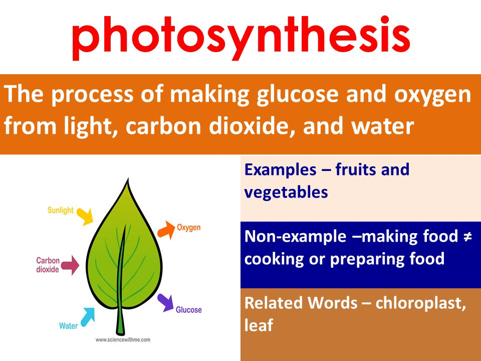 The process of making glucose and oxygen from light, carbon dioxide, and water Examples – fruits and vegetables Non-example –making food ≠ cooking or preparing food Related Words – chloroplast, leaf photosynthesis