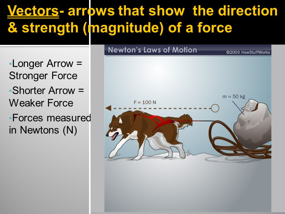 Vectors- arrows that show the direction & strength (magnitude) of a force Longer Arrow = Stronger Force Shorter Arrow = Weaker Force Forces measured in Newtons (N)