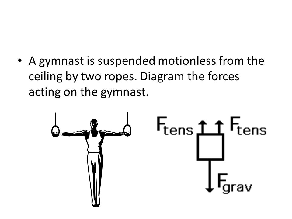A gymnast is suspended motionless from the ceiling by two ropes.