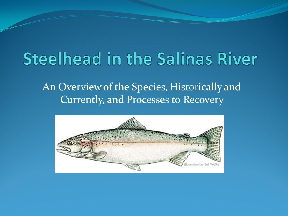 An Overview of the Species, Historically and Currently, and Processes to Recovery