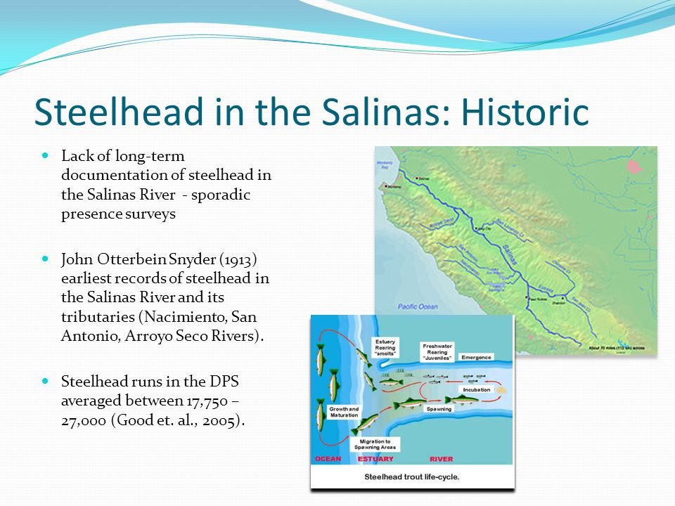 Current Status: Rapid Decline since 1960s Status Review (Busby et al., 1996) steelhead abundance <100 in the Salinas River (= 2-5% of estimated historic run size remains) Southern-Central California Coast (S-CCC) steelhead listed in 1997 as threatened under the Endangered Species Act (ESA).