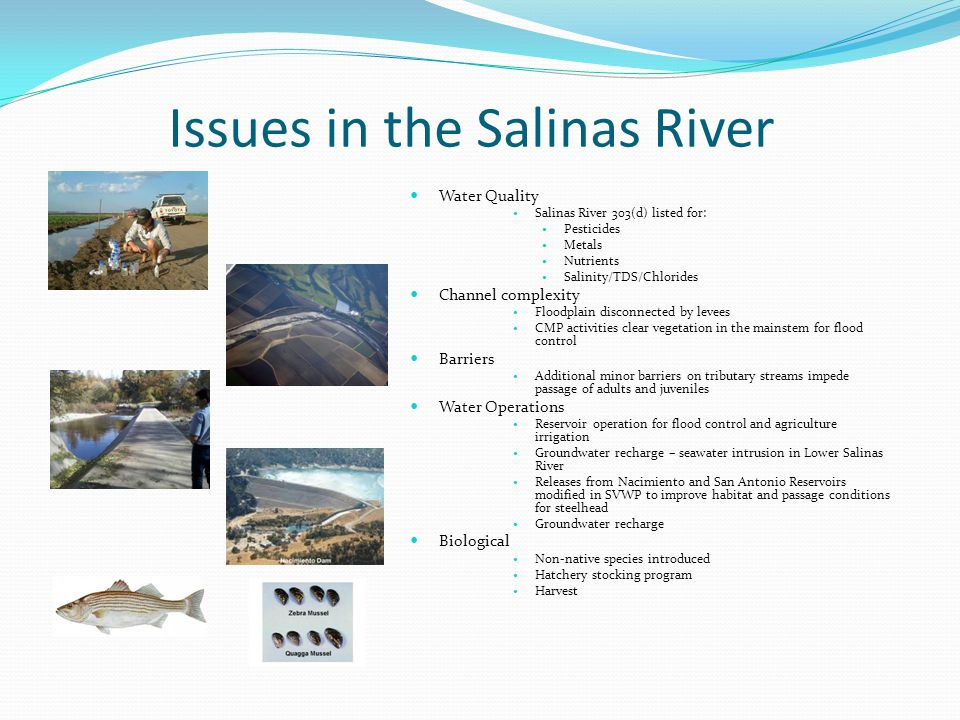 Habitat Reduction 3 Major Dams built from 1940-1960s Salinas Dam – 1944 San Antonio – 1956 Nacimiento – 1965 Fractured Habitat 90-93% loss of critical spawning and rearing habitat in Nacimiento and San Antonio Rivers Salinas River mainstem considered a migratory corridor Upper Salinas – important for aiding and dispersal of species in DPS Nacimiento Dam under construction 1959 Salinas Dam Spillway