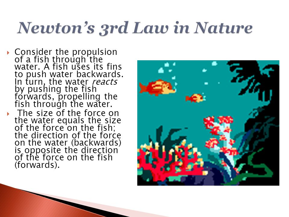 Consider the propulsion of a fish through the water. A fish uses its fins to push water backwards. In turn, the water reacts by pushing the fish for