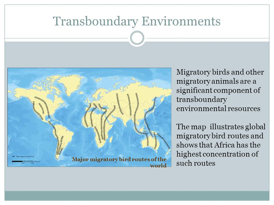 Transboundary Environments Major migratory bird routes of the world Migratory birds and other migratory animals are a significant component of transbo