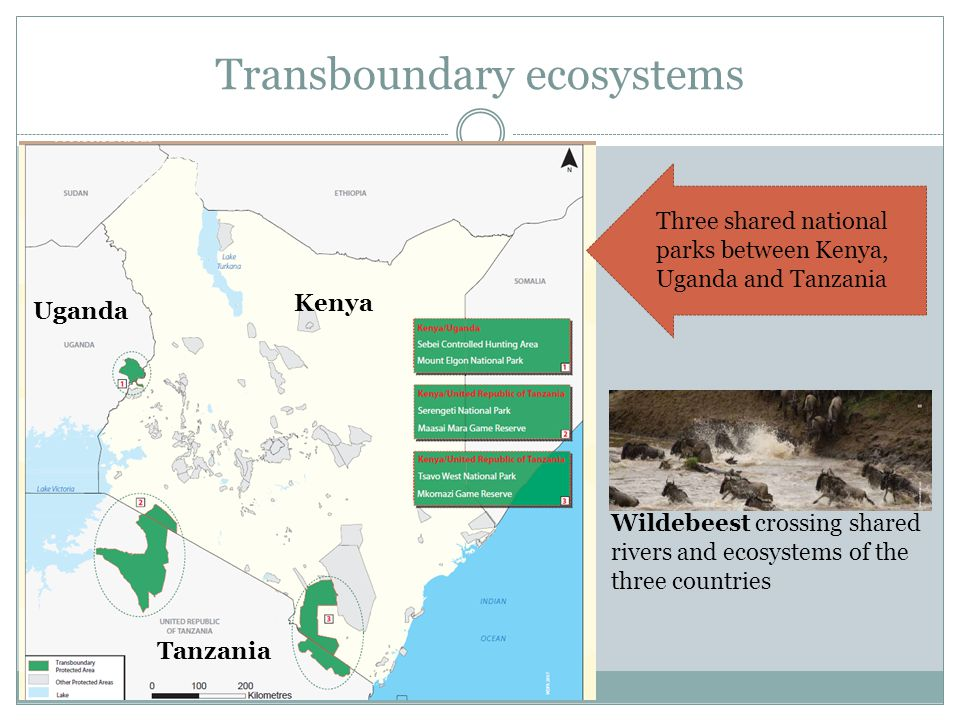 Transboundary ecosystems Kenya Uganda Tanzania Wildebeest crossing shared rivers and ecosystems of the three countries Three shared national parks bet