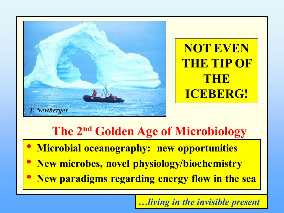 NOT EVEN THE TIP OF THE ICEBERG! T. Newberger Microbial oceanography: new opportunities New microbes, novel physiology/biochemistry New paradigms rega
