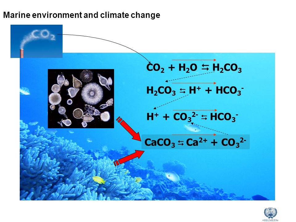 Marine Environmental Awareness Course CO 2 + H 2 O  H 2 CO 3 H 2 CO 3  H + + HCO 3 - H + + CO 3 2-  HCO 3 - CaCO 3  Ca 2+ + CO 3 2- Marine environment and climate change