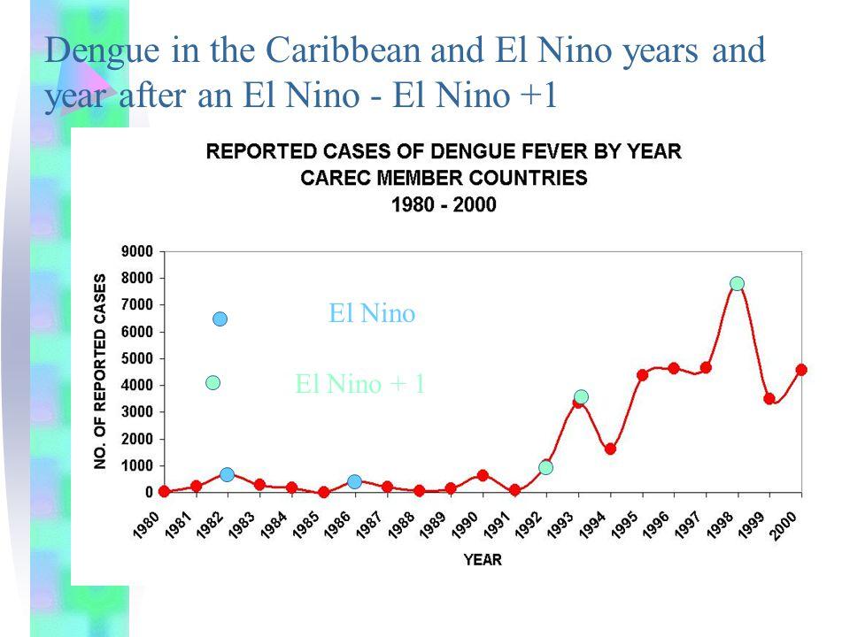 The Culprit (Vector) Also the dengue mosquito