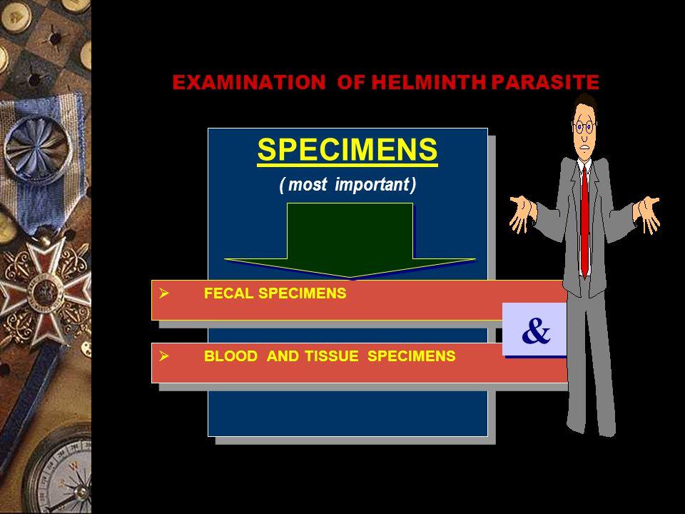 EXAMINATION OF HELMINTH PARASITE SPECIMENS ( most important ) SPECIMENS ( most important )  FECAL SPECIMENS  BLOOD AND TISSUE SPECIMENS & &