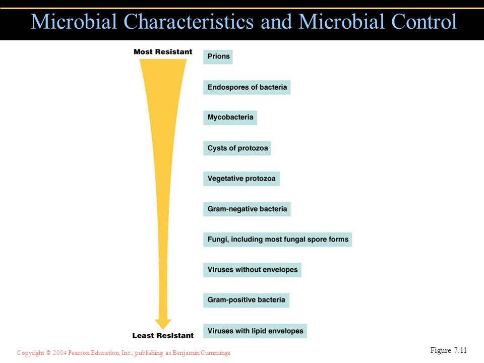 Copyright © 2004 Pearson Education, Inc., publishing as Benjamin Cummings Microbial Characteristics and Microbial Control Figure 7.11