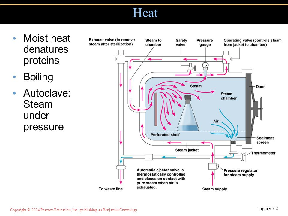 Copyright © 2004 Pearson Education, Inc., publishing as Benjamin Cummings Moist heat denatures proteins Boiling Autoclave: Steam under pressure Heat F