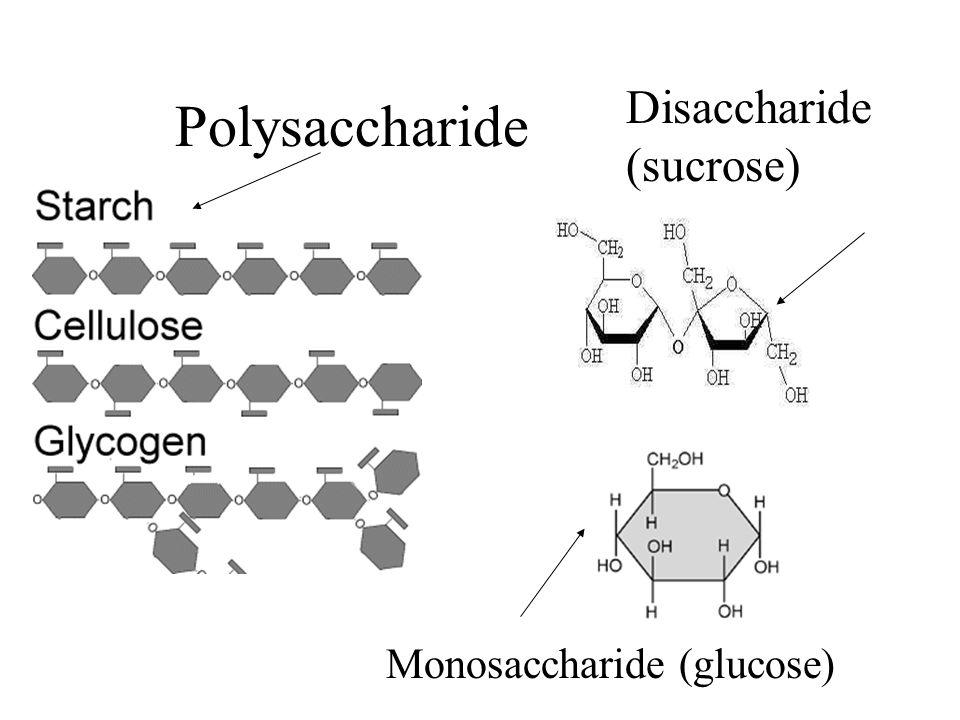 Polysaccharide Disaccharide (sucrose) Monosaccharide (glucose)