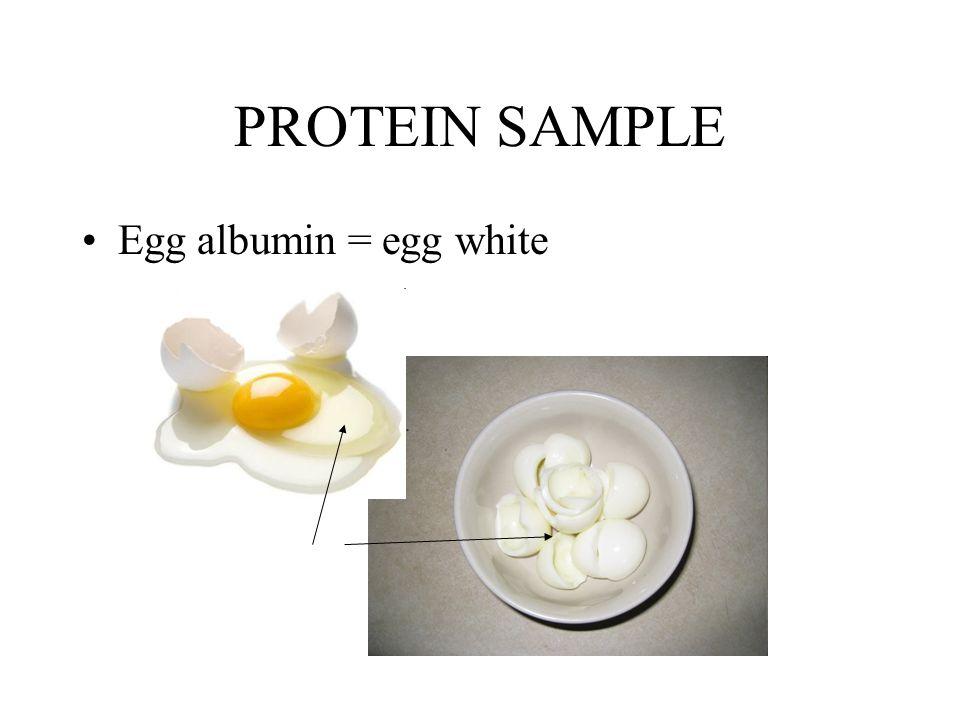 PROTEIN SAMPLE Egg albumin = egg white