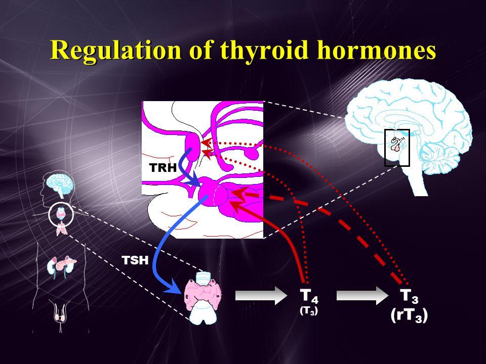Thyroid hormone production T1T1 T2T2 Thyroglobulin T4T4 T3T3 T3T3 T4T4 Iodide ( I - ) NIS * T4T4 T4T4 T4T4 TBG Alb TBPA I-I- ColloidFollicle TPO TSH (40X) * Sodium/Iodide Symporter protein