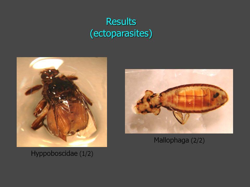 Hyppoboscidae (1/2) Mallophaga (2/2) Results (ectoparasites)