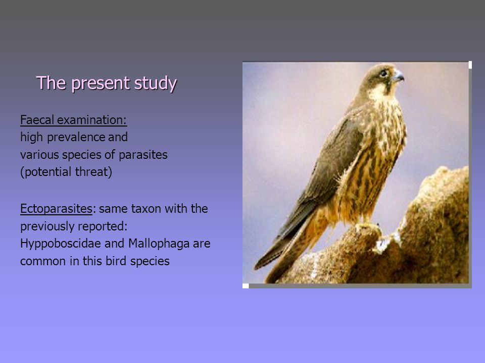 The present study The present study Faecal examination: high prevalence and various species of parasites (potential threat) Ectoparasites: same taxon with the previously reported: Hyppoboscidae and Mallophaga are common in this bird species