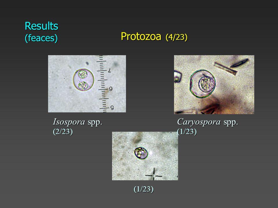 Results (feaces) Protozoa (4/23) Isospora spp. (2/23) Caryospora spp. (1/23) (1/23)