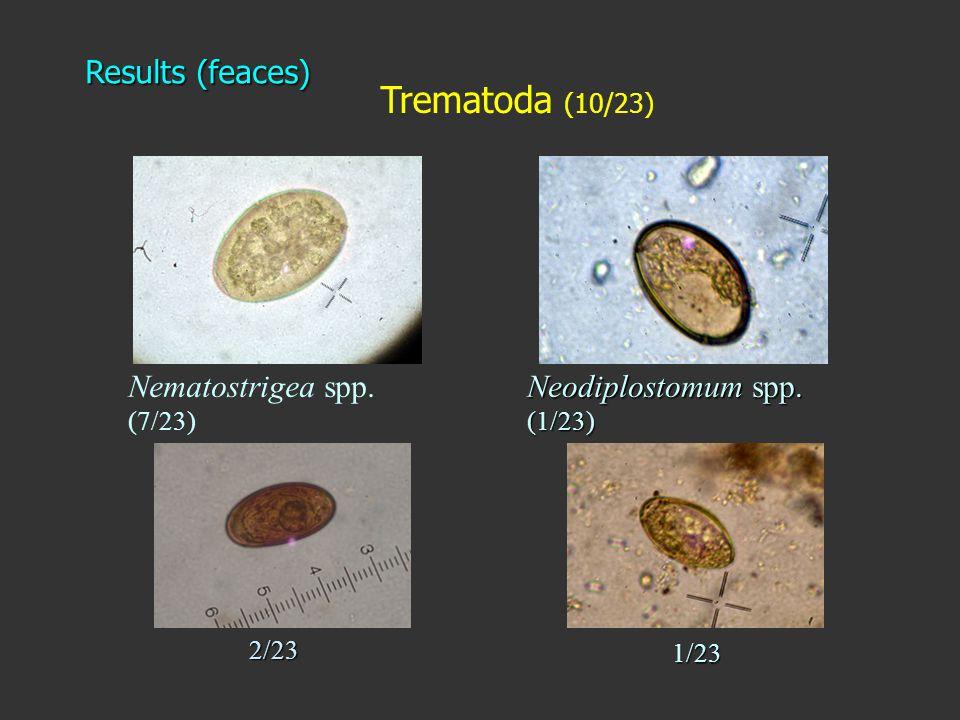 Trematoda (10/23) Neodiplostomum spp. (1/23) Nematostrigea spp. (7/23) Results (feaces) 2/23 1/23