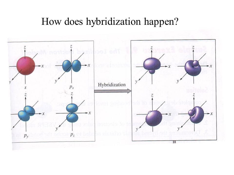 How does hybridization happen?