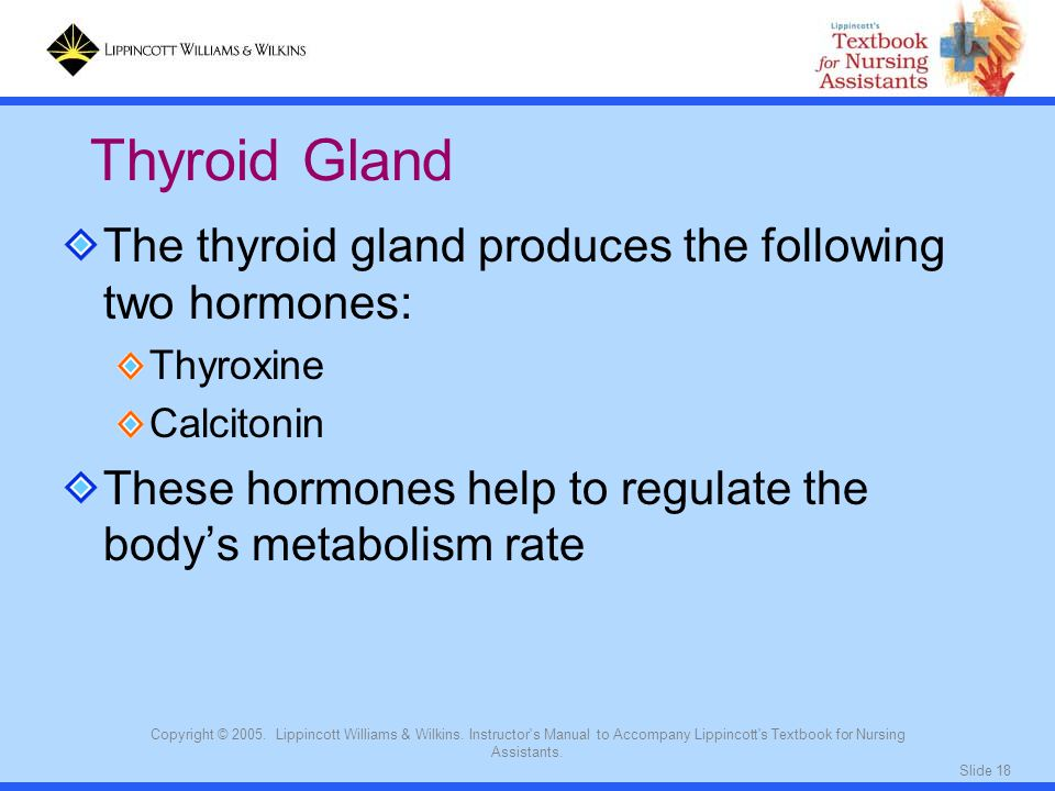 Slide 18 Copyright © 2005. Lippincott Williams & Wilkins. Instructor's Manual to Accompany Lippincott's Textbook for Nursing Assistants. The thyroid g