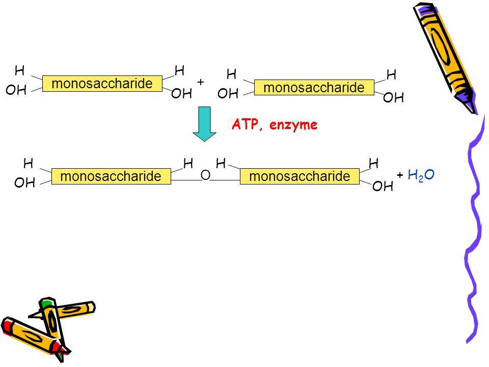 monosaccharide H OH H + monosaccharide H OH H ATP, enzyme monosaccharide H OH H O monosaccharide HH OH + H 2 O