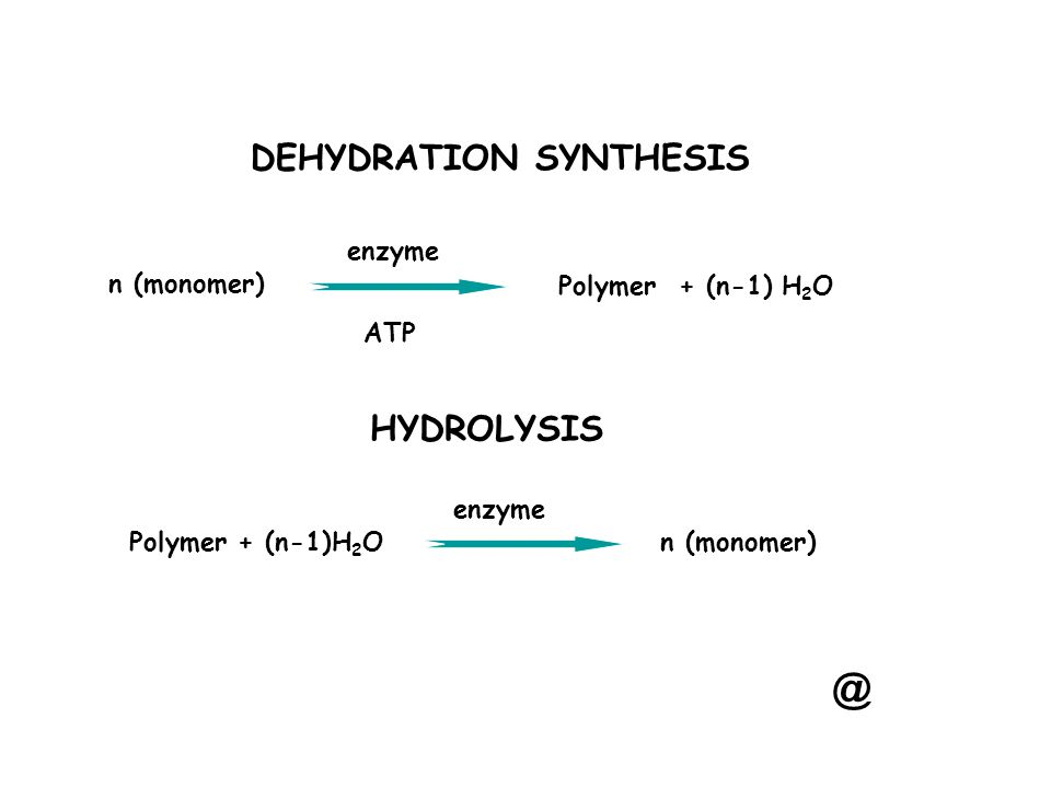 DEHYDRATION SYNTHESIS n (monomer) enzyme ATP Polymer + (n-1) H 2 O HYDROLYSIS enzyme n (monomer) @